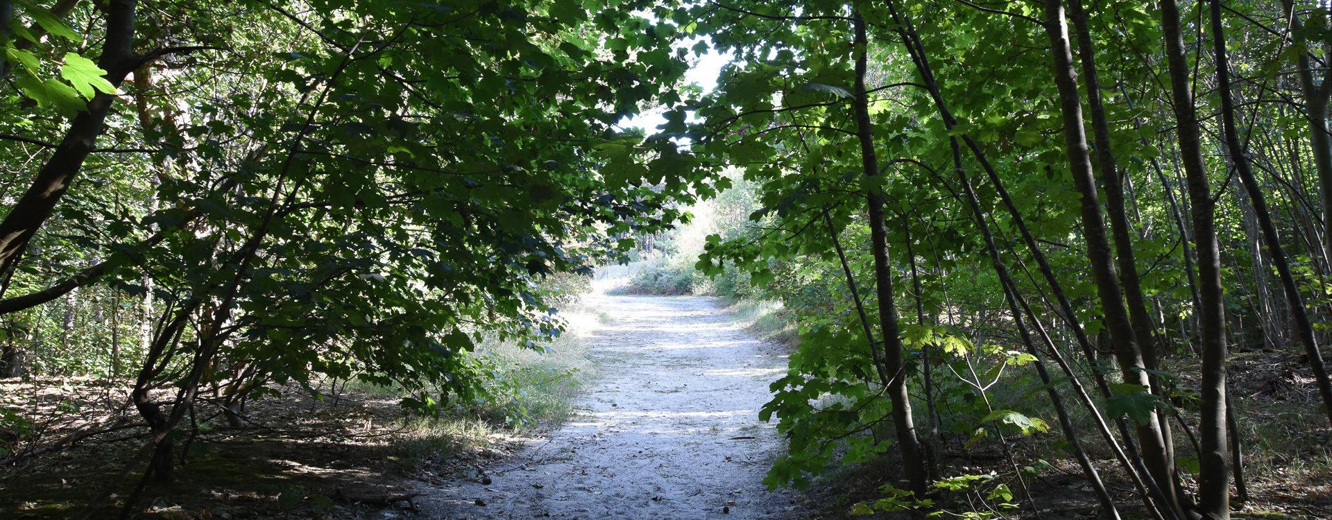 Kampeerverblijfpark Tolmzant - Tolmzant